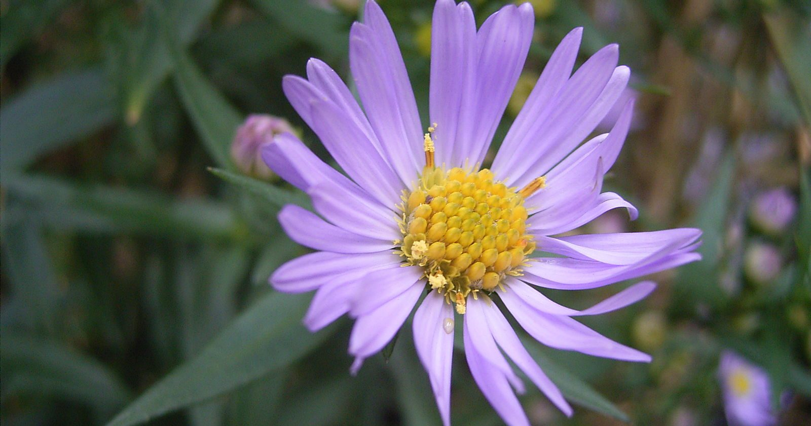The mysterious photo of a purple flower that receives 78 million hits each day
